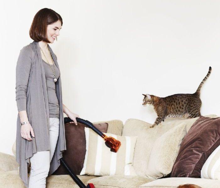 Как владельцам домашних животных сохранить чистоту коврвых покрытий